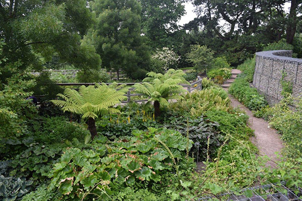 Tree ferns in a shady garden at RHS Hyde Hall