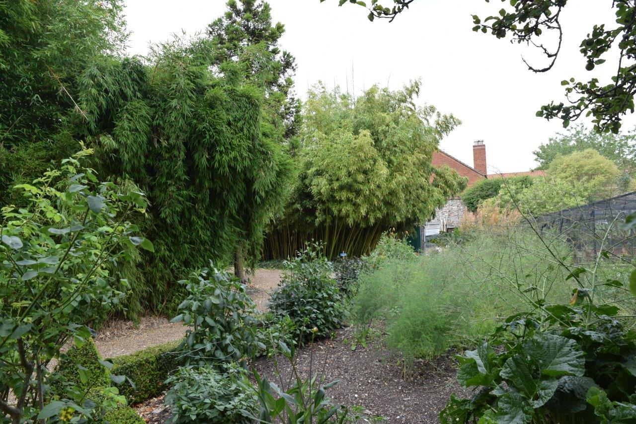 The netted cottage garden leading onto the bamboo copse
