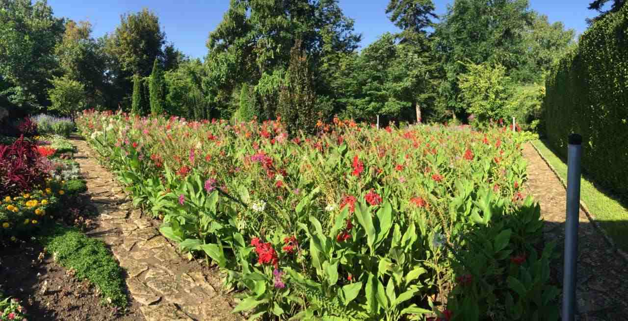 A field of Cleomies, Salvias and Cannas