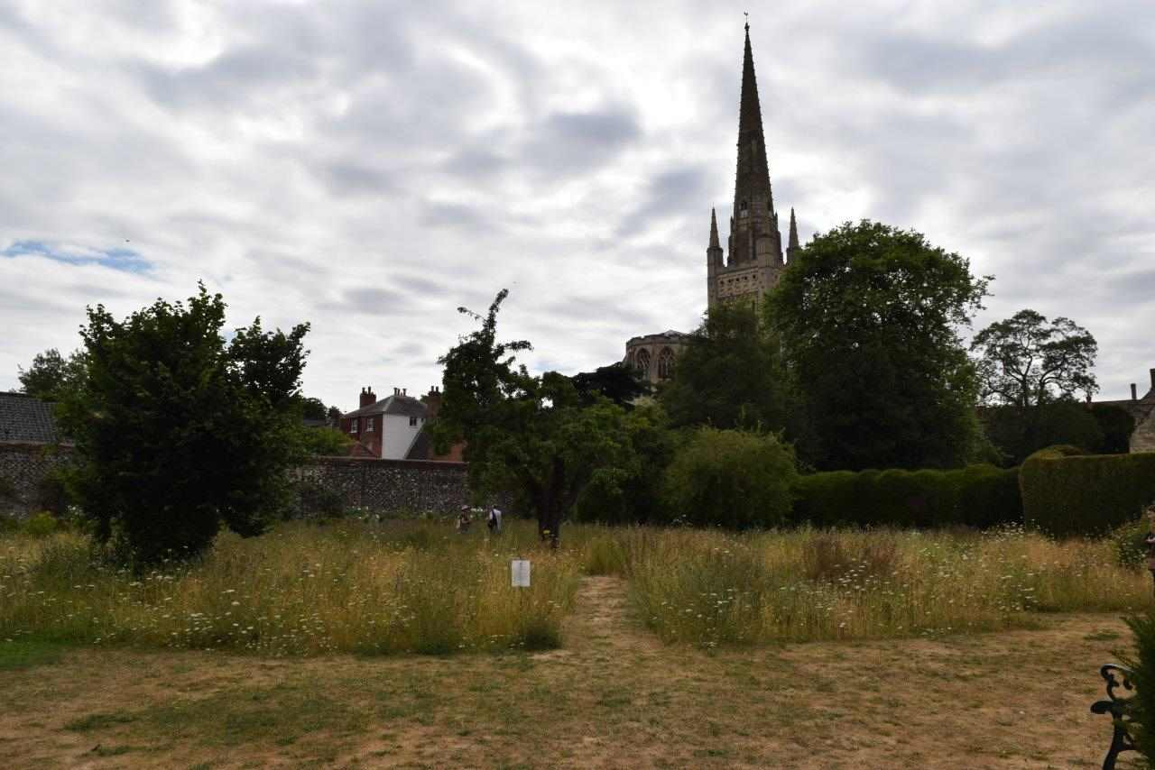 The Wildflower meadow at the Bishop's Garden, Norwich