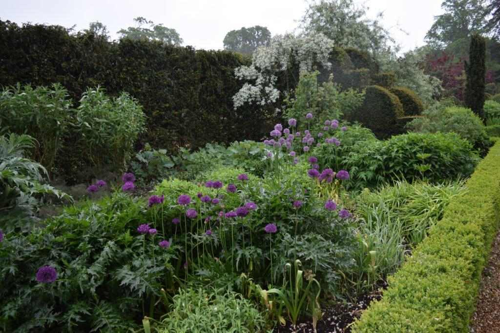 Alliums in the Double Border at Blickling Gardens