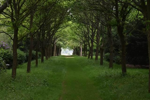 tree lined avenue at blickling gardens