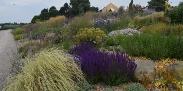 RHS Hyde Hall showing Mediterranean style planting