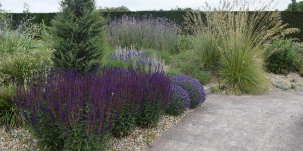RHS Hdee Hall showing Salvia and Pinus