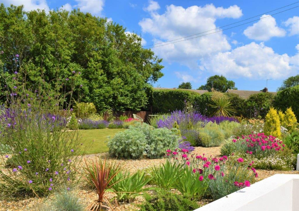 Mediterranean garden with salvias and lawn