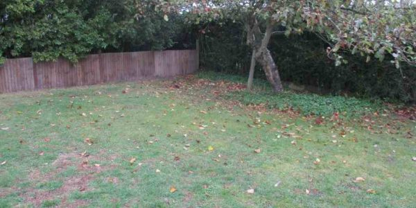 survey photo showing old apple tree in corner of garden