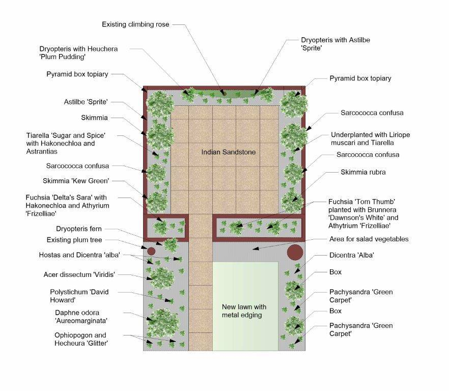 Norwich City garden Design Plan showing plants