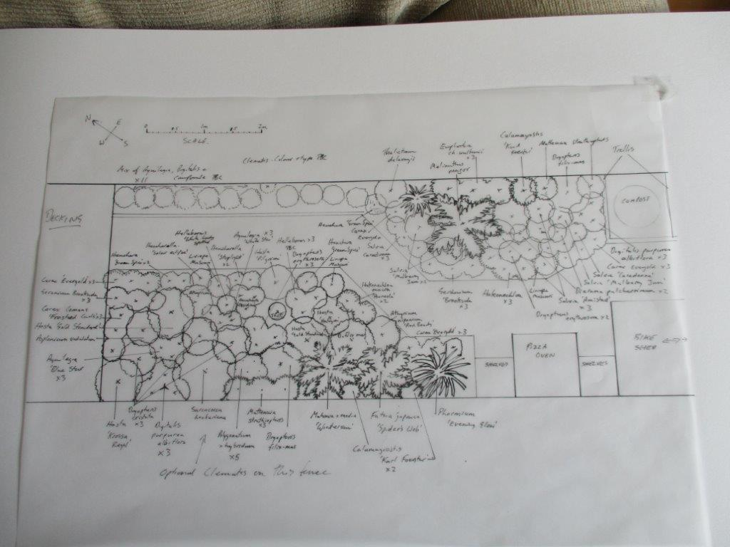 The planting plan for the back garden