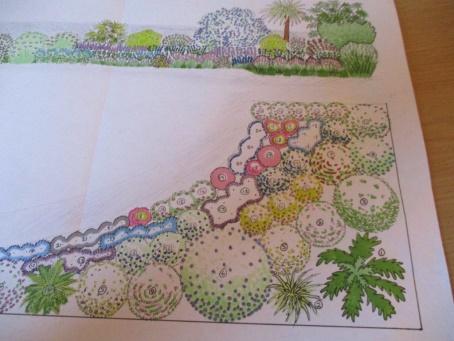 Hand drawn Mediterranean planting plan